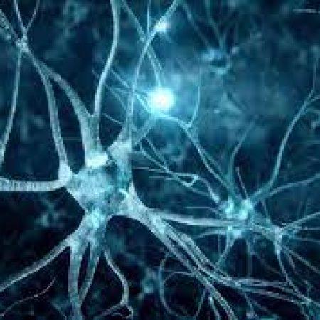 La Teoría Neuronal