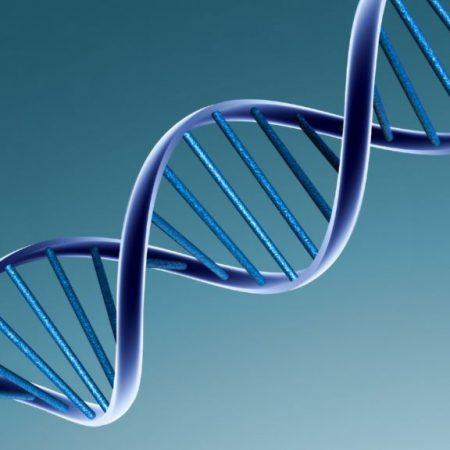 Qué es el ADN y cómo funciona - Tema 2 psicobiología